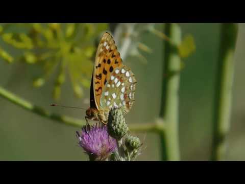sonidos-/-naturaleza-/-mariposas-/-musica-/-relajacion