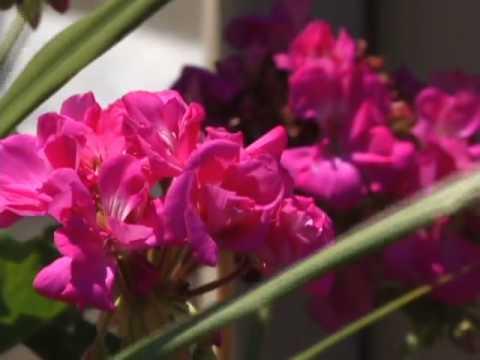 Visit Fairfax--Video 6