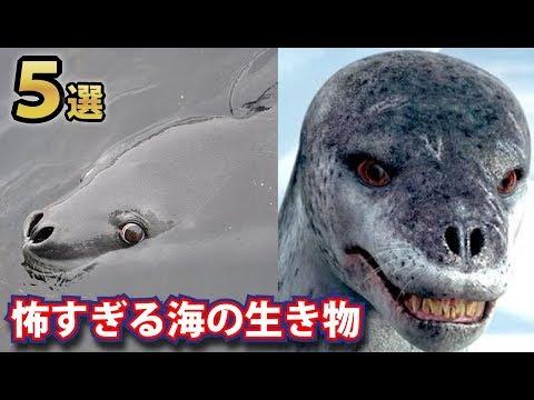 怖すぎる実在する海の生き物5選!海で最強の生き物はどいつだ!?