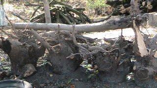 видео расчистка участка