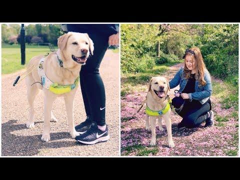 I'm Walking 100,000 Steps For Guide Dogs | Fashioneyesta