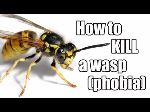 Episode #21 - How to kill a wasp (phobia)