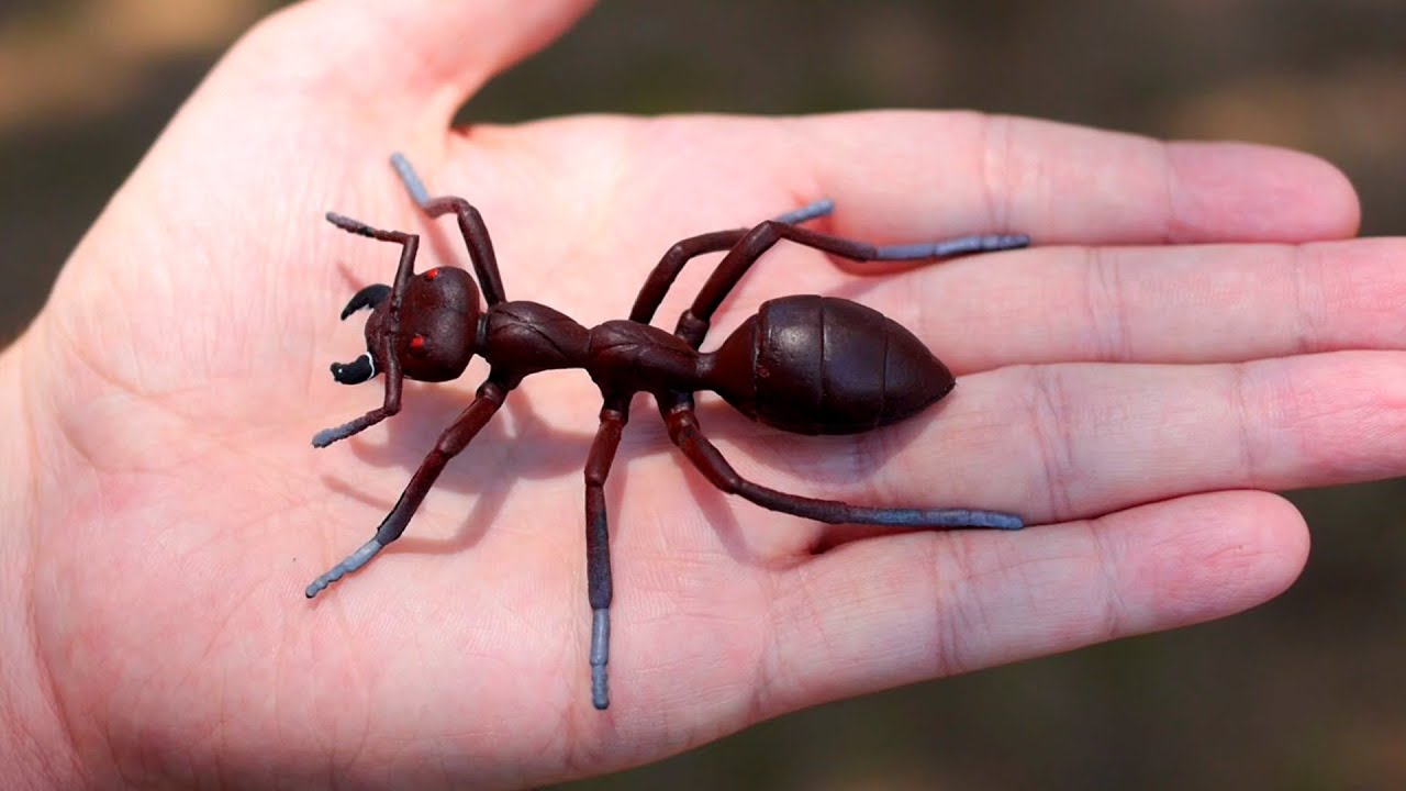 The largest ant in the world 4