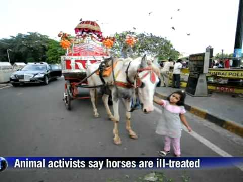 End of the road for Mumbai's horse-drawn carriages?