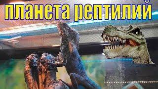 """Рептилии/ Контактный зоопарк """"Зооландия"""" Мурманск/ Увидела ли я свинку"""