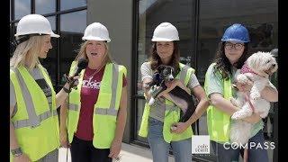 Cole Team Halcyon Sneak Peek: Furkids Animal Rescue and Shelters