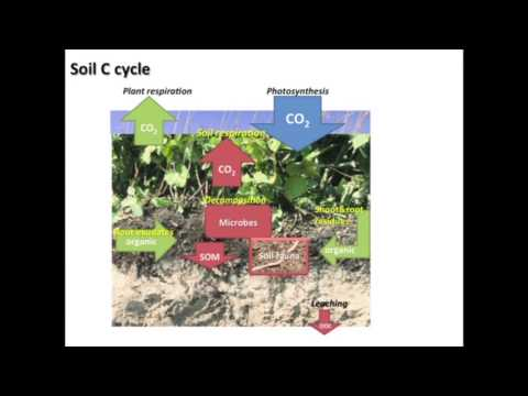 Speed Science: The Soil Carbon Cycle