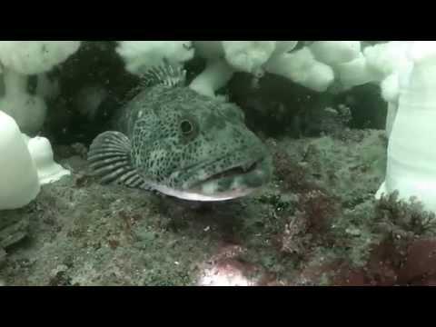 Scuba diving at Keystone Jetty