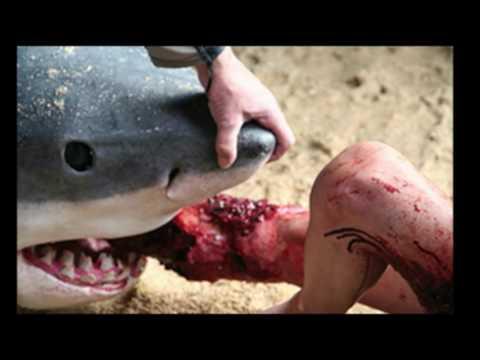 Shark Attacks Warning ! California 2016
