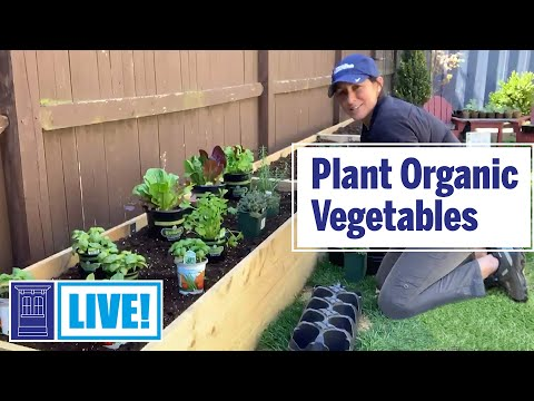 How to Plant Organic Vegetables | This Old House: Live
