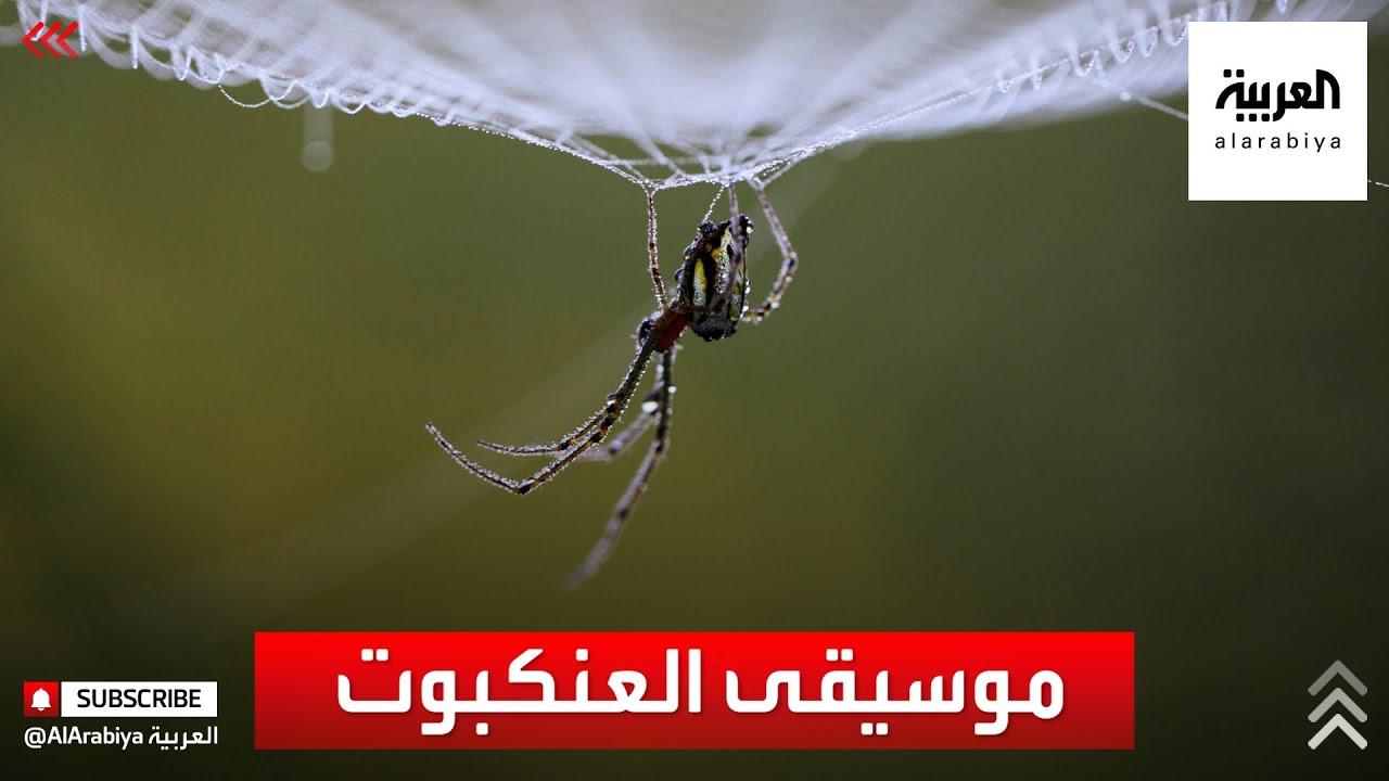 علماء يكتشفون أصوات العناكب.. كأنها لحن  - نشر قبل 20 دقيقة