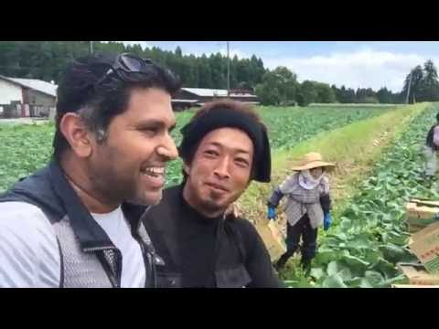 Cabbage Farmers of Aso Japan