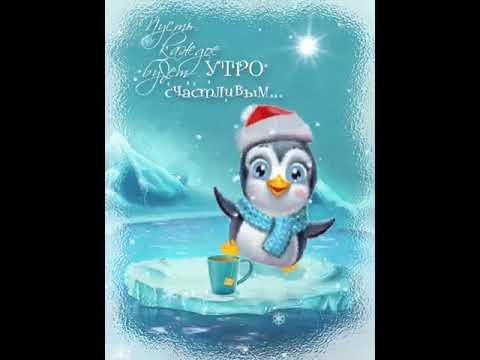 Красиво, доброе утро в январе с пингвинами картинки