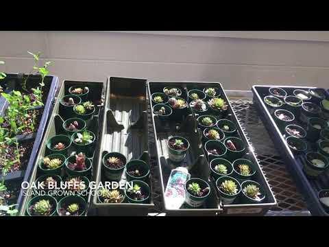 School Garden - Oak Bluffs Elementary School