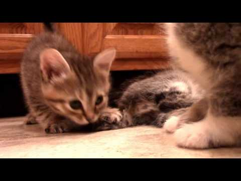 Kittens playing and fighting Compilation