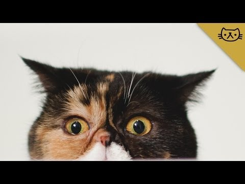 Best of Pudge the Cat Vine and Instagram Compilation
