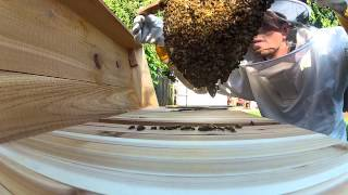 Top Bar Hive - Comb In Making Day 7