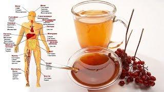 Если вы будете употреблять ягоды калины КАЖДЫЙ ДЕНЬ, то вот что произойдет с вашим телом