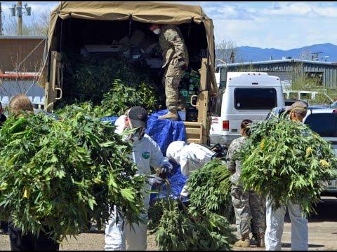 Federal Agents Raid Colorado Marijuana Growing Ops
