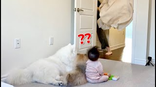 How Dog and Baby React Differently to Disappearing Magic