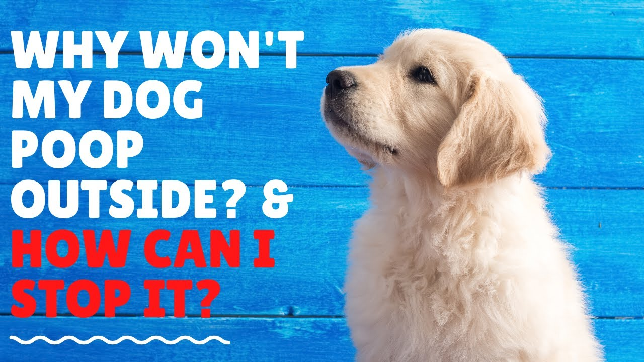 Why Won't my Dog Poop Outside? How Can I Stop It? - YouTube