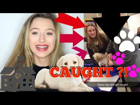 What happens when you sneak a dog into school.. *LIVE FOOTAGE*