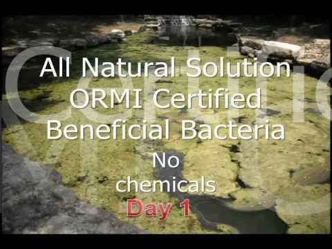 Probiotics Clean Local Pond