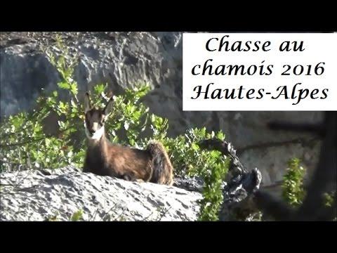 Chasse du chamois dans les Hautes-Alpes 2016