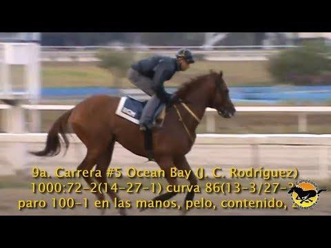 """CAMPEONES EN LA ARENA Programa Clásico """"Presidente de la República 2018"""" Hipódromo La Rinconada"""