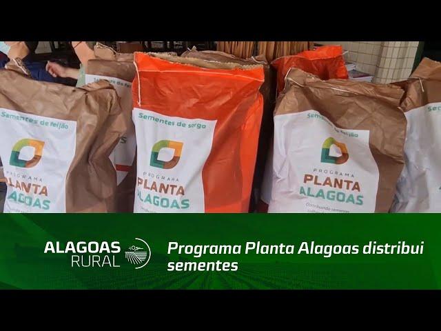 Programa Planta Alagoas distribui sementes para agricultores familiares