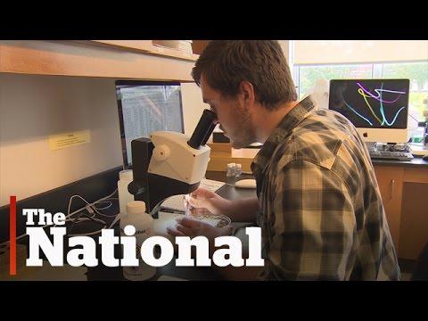DNA Barcoding | Cataloguing all of earth's species