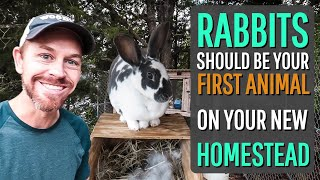 6 Reasons Why Rabbits Should be the FIRST Animal On Your Homestead