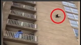 Brave raccoon in Ocean City, New Jersey, was seen scaling a building thumbnail
