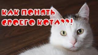 Почему мяукают кошки??!