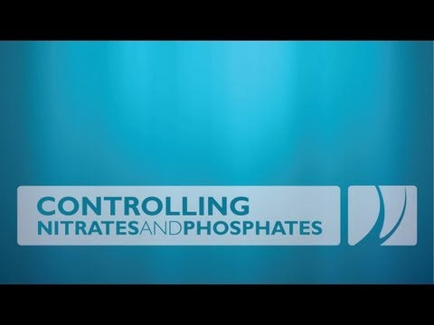 Controlling Nitrates and Phosphates in Reef Aquarium