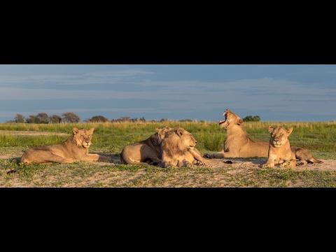 Safari in Botswana, Zambia and Zimbabwe 2016