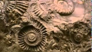 видео Путешествие Чарльза Дарвина на