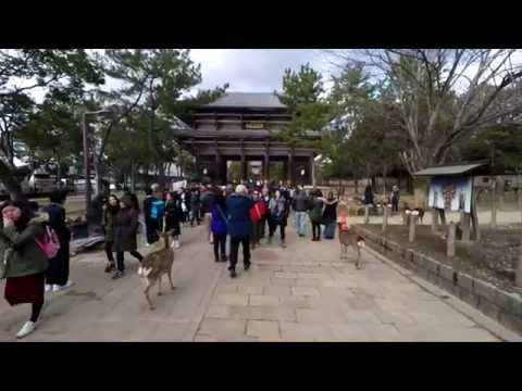 GAS in Japan 2015  - Part Two - Kyoto and Nara