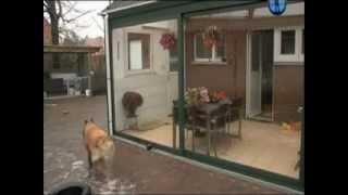 Планета собак. Бельгийская овчарка Тервюрен(Бельгийская овчарка. Тервюрен http://pet-daria.com., 2012-09-11T01:04:10.000Z)