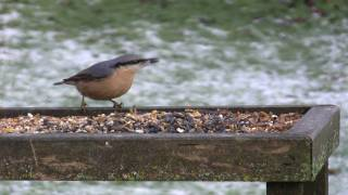 Garden Birds Feeding On Bird Table
