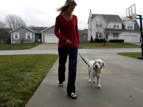 service-dog-windsor-training-to-switch-from-heel-to-side.avi