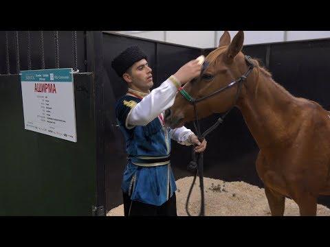 Впервые за 100 лет карабахские скакуны Азербайджана снова в России. Репортаж «Москва-Баку»
