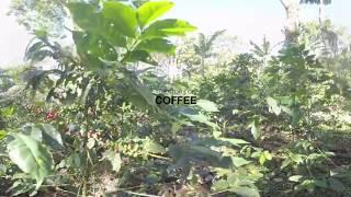 180511 Coffee Final V01