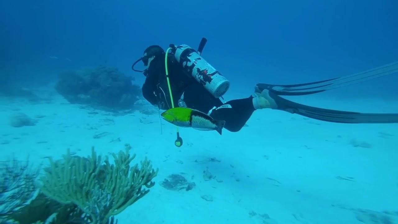 Ssi open water diver certification cayo largo cuba youtube ssi open water diver certification cayo largo cuba xflitez Choice Image