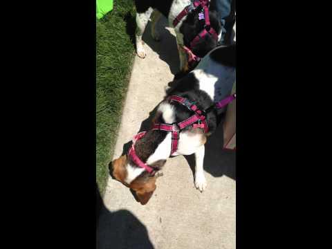 Oakley Pup Crawl Toppl Fun