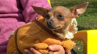Ищу семью: собаки и щенки из приюта Сумского общества защиты животных