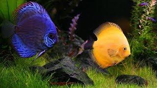 Аквариум для начинающих  Где купить аквариумных рыбок и растения  Рынок,Зоомагазин, Интернет