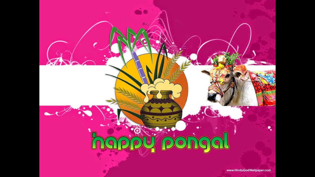 Happy pongal 2015 hd video wishes greetings animation 3d youtube m4hsunfo Gallery