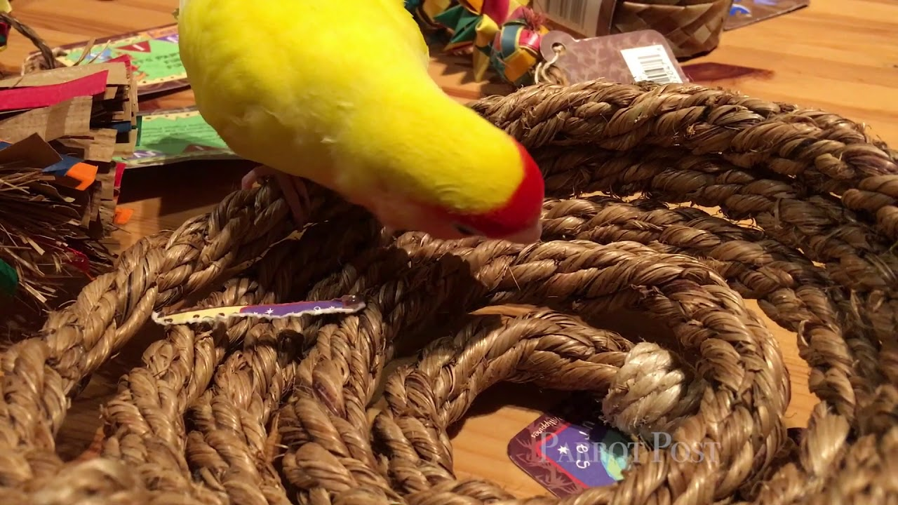 Discount Bird Toys : Unboxing new bird toys together! youtube