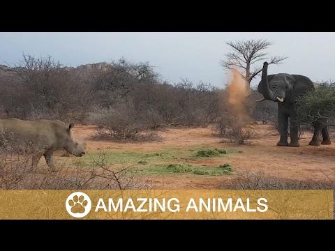 Elephant Fights Off Rhino Group